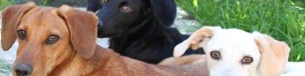 Kretahunde.dk